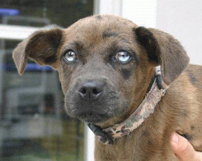 Pound Puppies N Kittens Pet Rescue Georgia